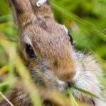 Easter Warning: Climate Change Threatens Bunnies